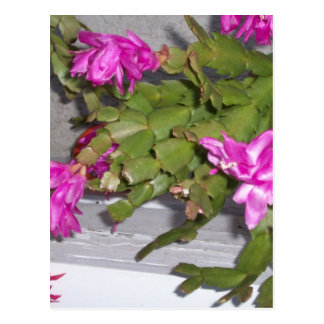Pink Flower Cacus Postcard