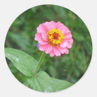 pink flower classic round sticker