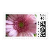 Pink Flower Close Up Big Flower stamp