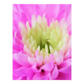 Pink Flower Closeup Full Color Flyer