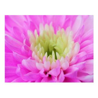 Pink Flower Closeup Postcard