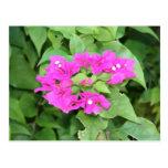 Pink Flower Cluster Postcard