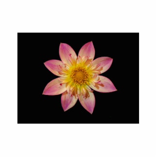 Pink Flower Cutout