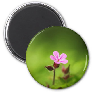 Pink flower fridge magnets