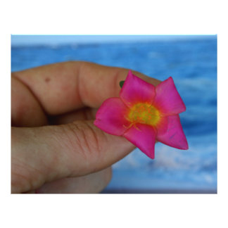 pink flower in fingers against blue flyers