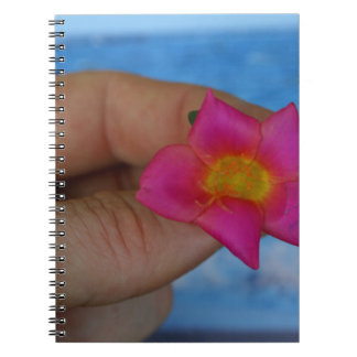 pink flower in fingers against blue notebook