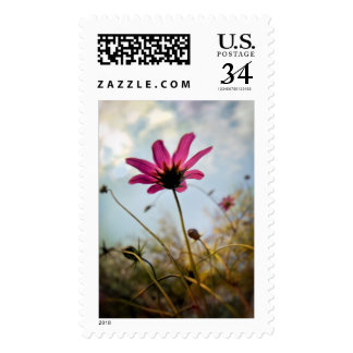 Pink Flower in the Sun Postage