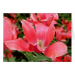 Pink Flower in Tivoli, Denmark Greeting Cards