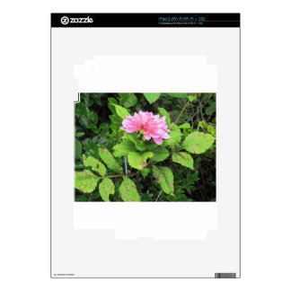 pink flower iPad 2 decal