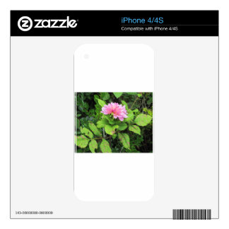 pink flower iPhone 4 decal