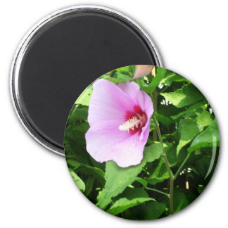 PINK Flower Lilly TEMPLATE Reseller Holiday Gifts Magnets
