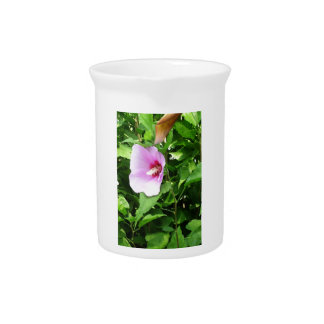 PINK Flower Lilly TEMPLATE Reseller Holiday Gifts Beverage Pitcher