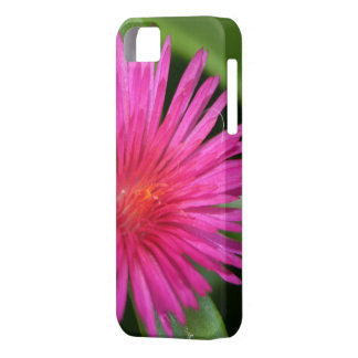 Pink Flower of Succulent Carpet Weed iPhone SE/5/5s Case