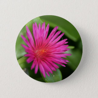 Pink Flower of Succulent Carpet Weed Pinback Button