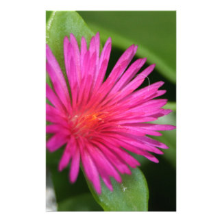 Pink Flower of Succulent Carpet Weed Stationery