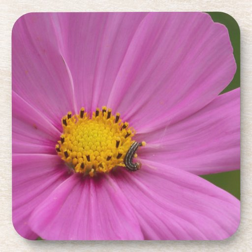 Pink Flower on a card or gift Coaster