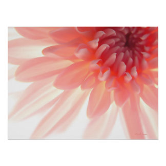 Pink Flower Petals Abstract Poster