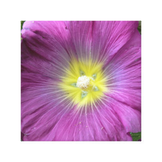 Pink Flower Photo Single Reproduction Canvas Print