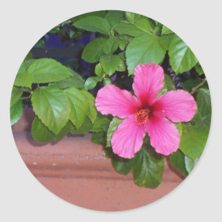 Pink Flower Photo Sticker