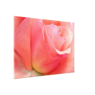 Pink Flower pic Stretched Canvas Print