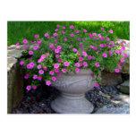 Pink Flower Planter Cards Post Card