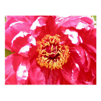 Pink Flower Post Card