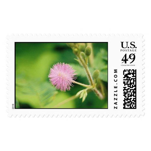 Pink Flower Postage
