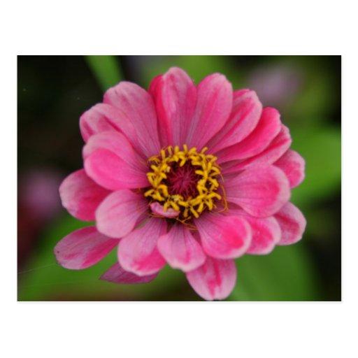 pink flower postcard