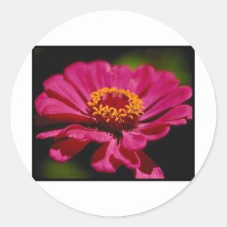 Pink Flower Power Classic Round Sticker