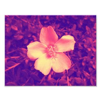 Pink Flower Print 8.5 x 11 Photo Print