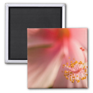 Pink Flower Stamen Macro Photography Magnet