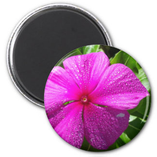 Pink Flower with Raindrops Magnet