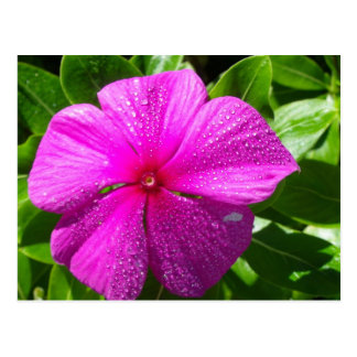 Pink Flower with Raindrops Post Cards