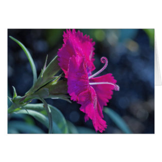 Pink Flower with Stamens - Blank Inside Card