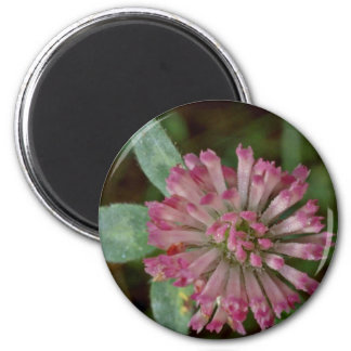 Pink Flower With Tubular Petals flowers Magnet
