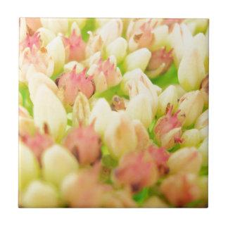 Pink Flowerbed Ceramic Tiles