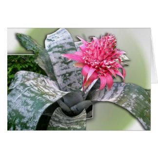 Pink Flowered Bromeliad Greeting Cards