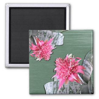 Pink Flowered Bromeliad Fridge Magnets