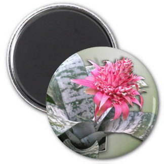 Pink Flowered Bromeliad Fridge Magnet