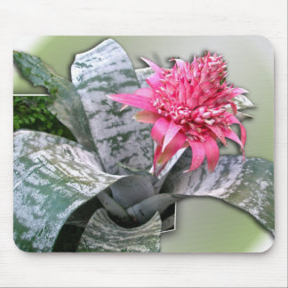 Pink Flowered Bromeliad Mouse Pads