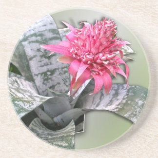 Pink Flowered Bromeliad Sandstone Coaster
