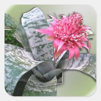Pink Flowered Bromeliad Stickers