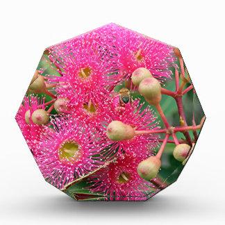 Pink flowering Australian gum tree Acrylic Award