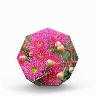 Pink flowering Australian gum tree Award