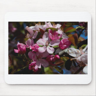 Pink Flowering Crabapple Blooms Mouse Pad