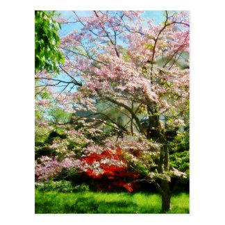 Pink Flowering Dogwood Postcards
