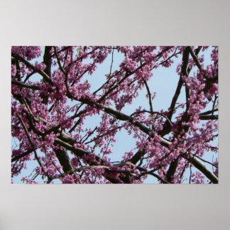 Pink Flowering Tree in Spring Posters