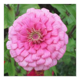 Pink Flowering Zinnia Card