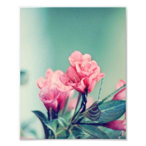 Pink Flowers 8x10 Print Photo Art