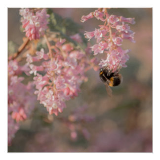 Pink flowers and bee close up photograph poster